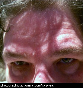 Photo of a sweaty forehead