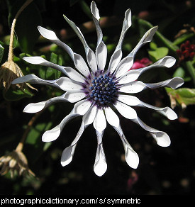 Photo of a symmetrical flower