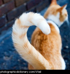 Photo of a cat's tail.