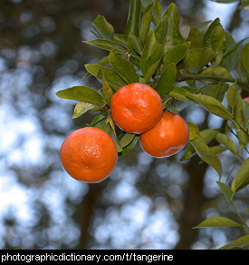 Photo of tangerines