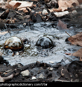Photo of a tar pit