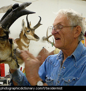 Photo of a taxidermist at work