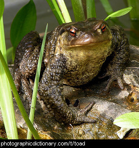 Photo of a toad