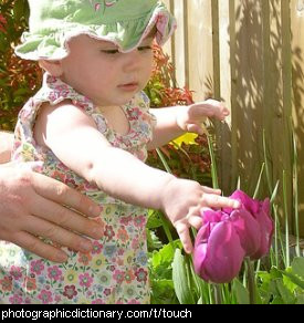 Photo of a little girl touching a flower
