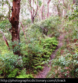 Photo of a track through scrub