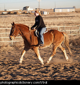 Photo of a horse trotting