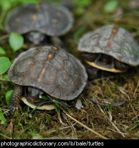 Photo of a group of turtles