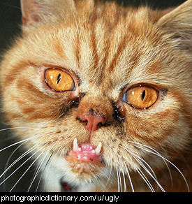 Photo of an ugly cat