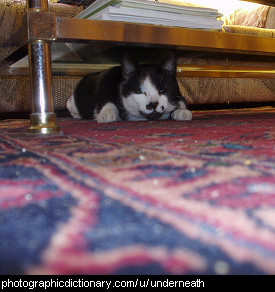 Photo of a cat under a coffee table