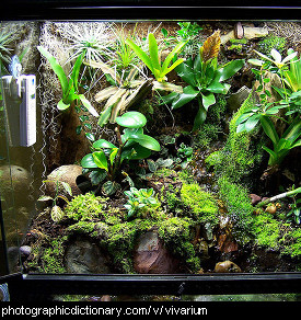 Photo of a vivarium