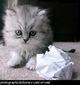 Photo of a kitten and a wad of paper