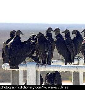 Photo of a group of vultures