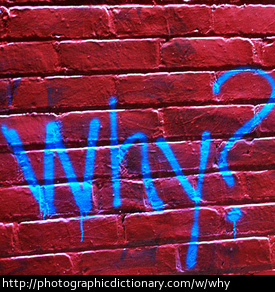 Photo of the word why in graffiti
