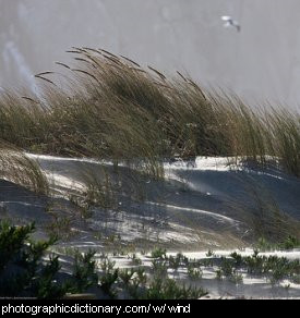 Photo of wind over a sand dune