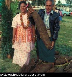 Photo of a yam