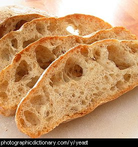 Photo of yeasty bread.