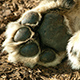 Photo of a paw