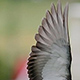 Photo of a birds wing